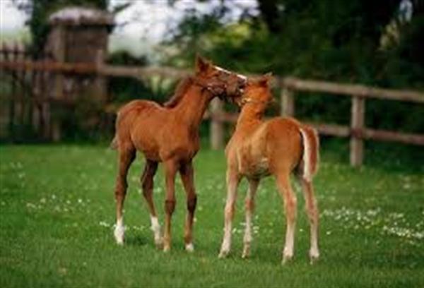 Weatherbys 30 Day Foal Registration
