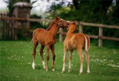 30 Day Foal Notification