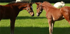 2019 Foal Preparation Workshop Follow on Guide 2019
