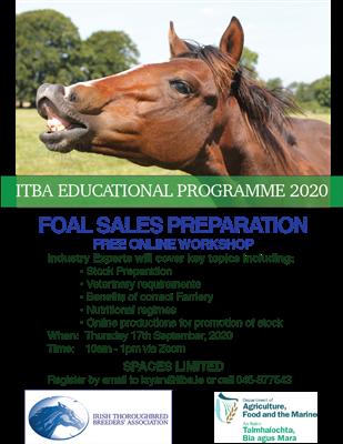 ITBA Foals Sales Preparation Workshop 2020 Moves Online