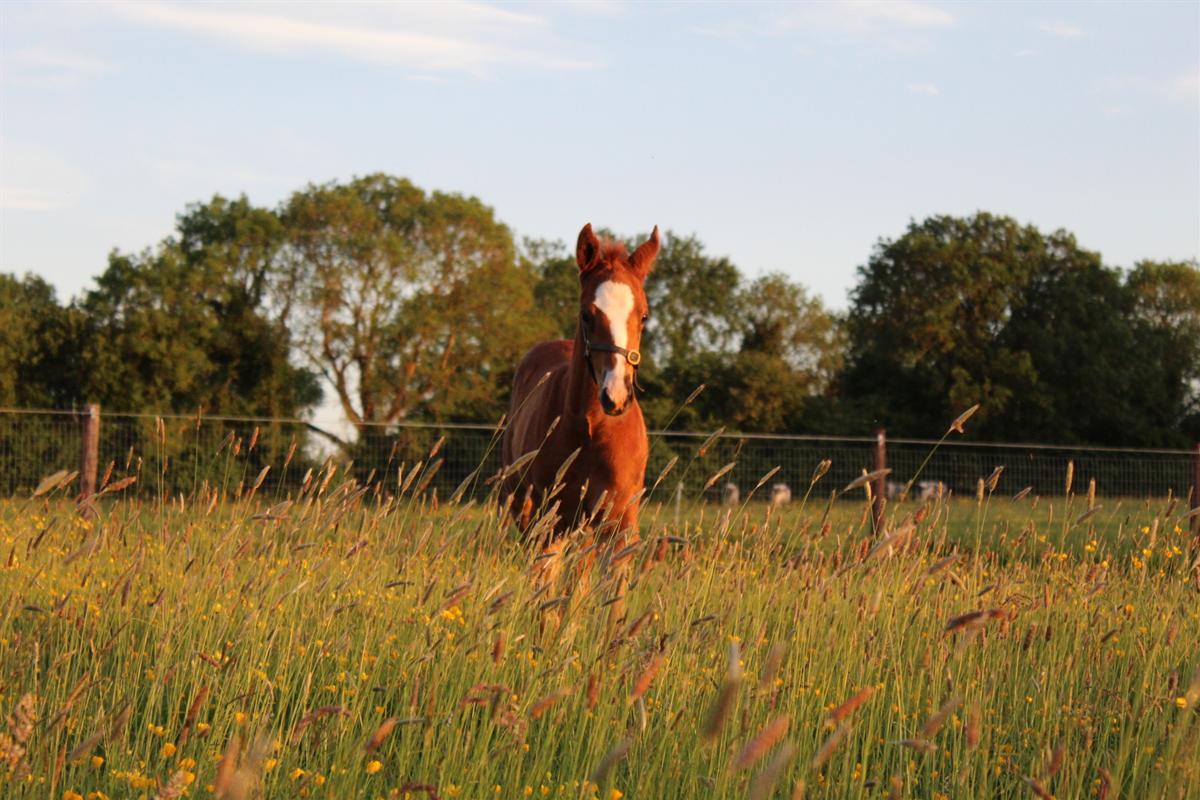 ITBA Foal Sales Preparation  2020 Workshop Follow on Guide